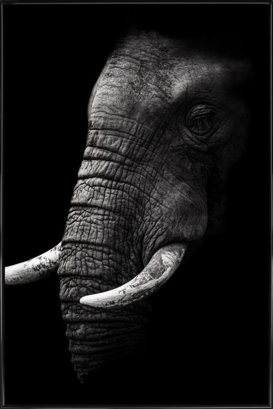 Portrait - Wild Photo Art ingelijste poster