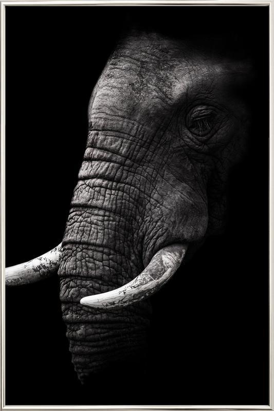 Portrait - Wild Photo Art poster in aluminium lijst
