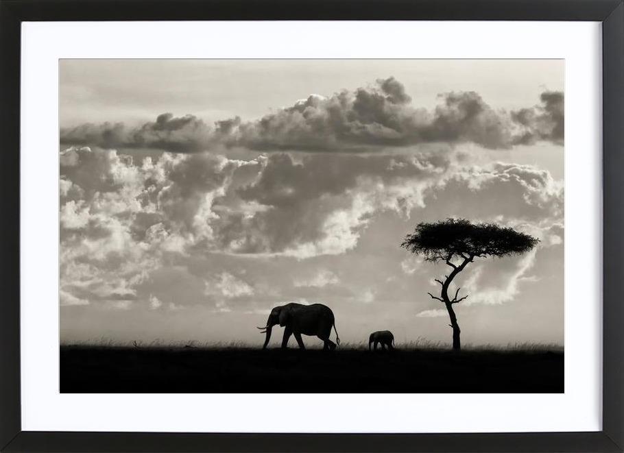 Silhouettes of Mara - Mario Moreno ingelijste print