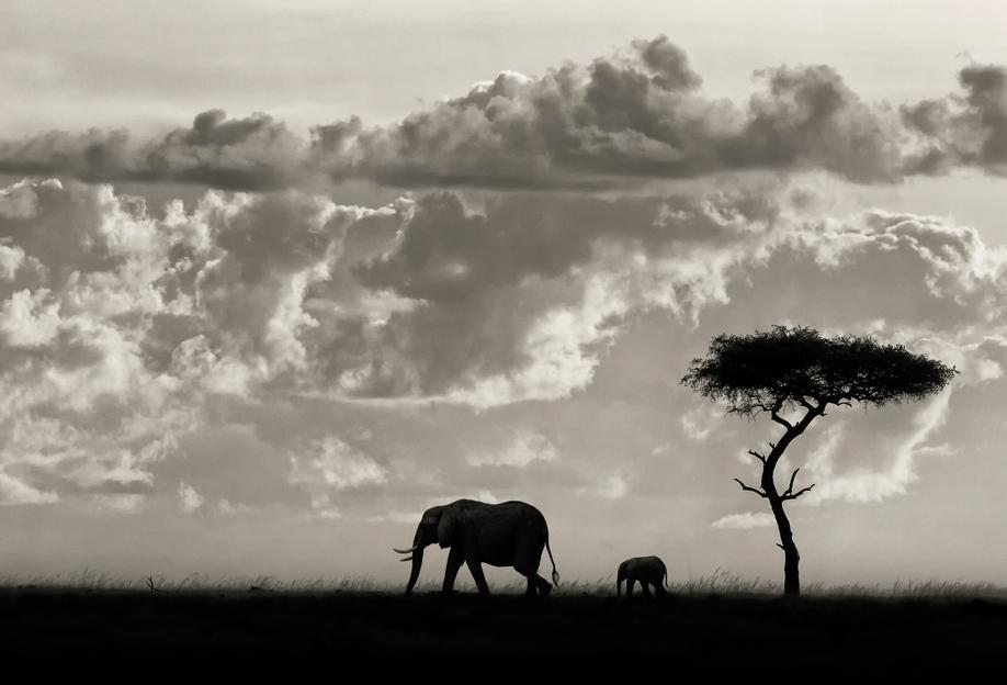 Silhouettes of Mara - Mario Moreno alu dibond