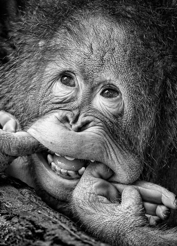 Big Smile.....Please - Angela Muliani Hartojo Canvas Print