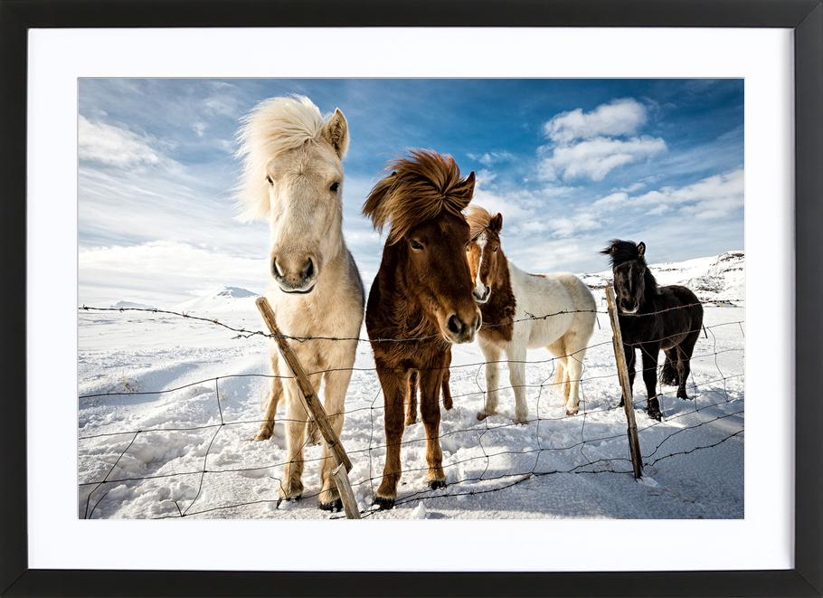 Icelandic Hair Style - Mike Leske Framed Print