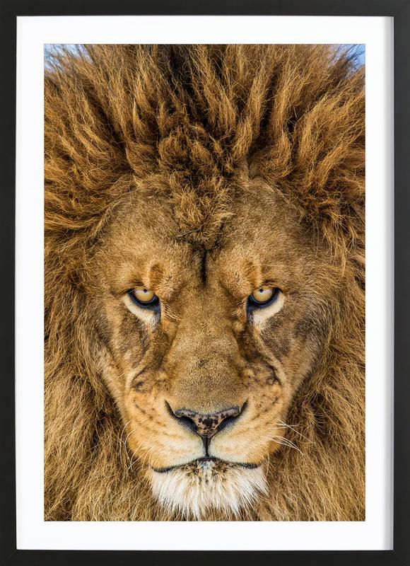 Serious Lion - Mike Centioli Framed Print