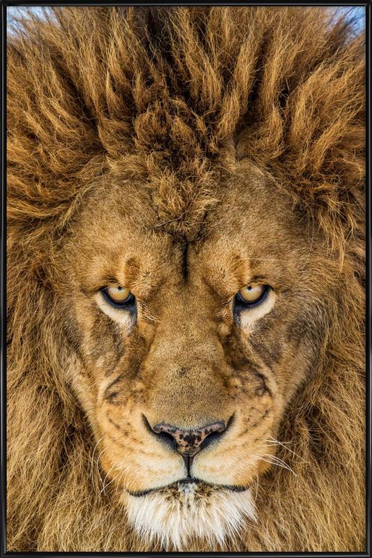 Serious Lion - Mike Centioli ingelijste poster