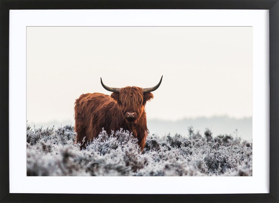 Highlander - Jaap Van Den -Bild mit Holzrahmen