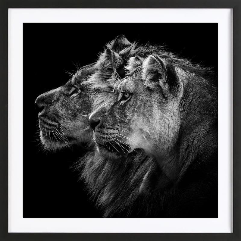 Lion And  Lioness Pt - Laurent Lothare Dambreville -Bild mit Holzrahmen
