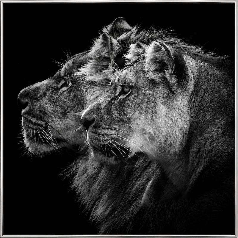 Lion And  Lioness Pt - Laurent Lothare Dambreville -Poster im Alurahmen