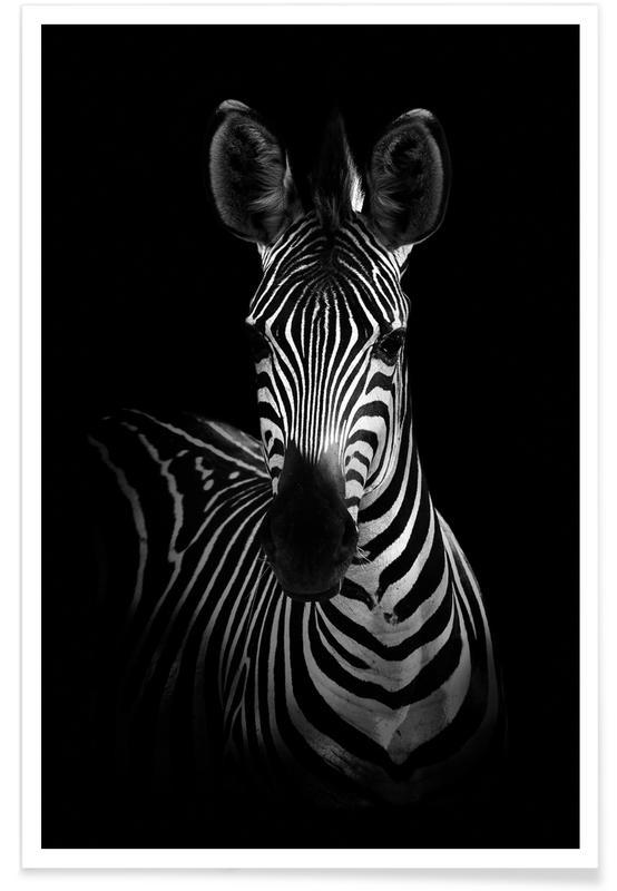 The Zebra - Wildphotoart -Poster