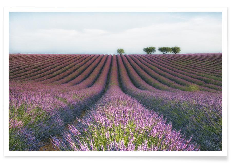 Velours De Lavender - Margarita Chernilova affiche