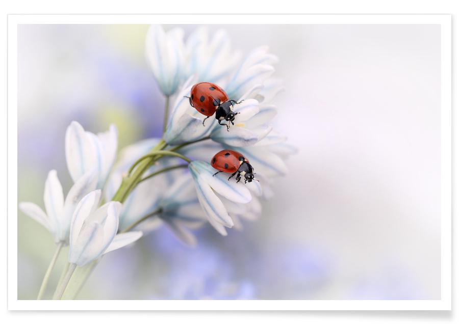 Ladybirds - Ellen Van Deelen Poster