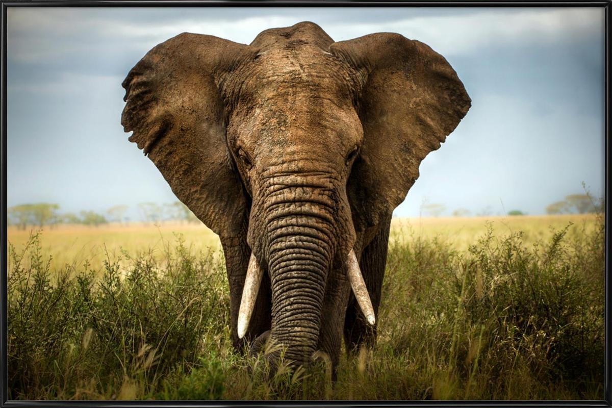 Encounters in Serengeti - Alberto Ghizzi Panizza -Bild mit Kunststoffrahmen