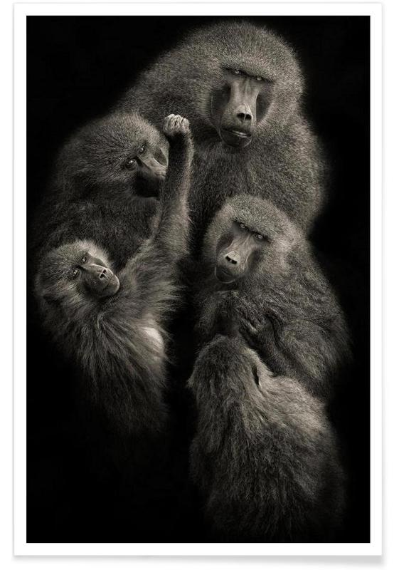 "Baboons "" UNITED "" - Mario Moreno affiche"