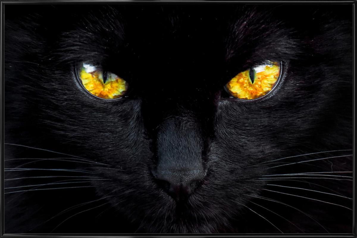 The Hypnotist of the Night -Bild mit Kunststoffrahmen