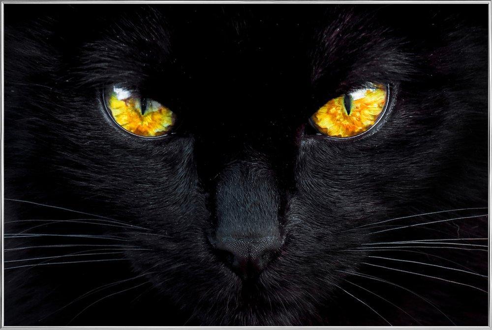 The Hypnotist of the Night -Poster im Alurahmen