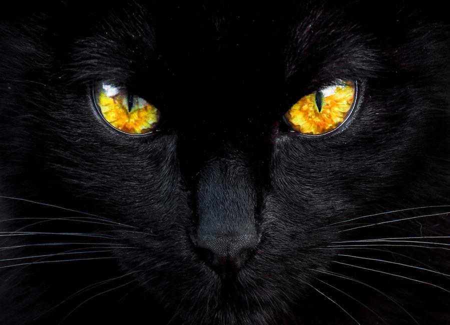 The Hypnotist of the Night -Leinwandbild