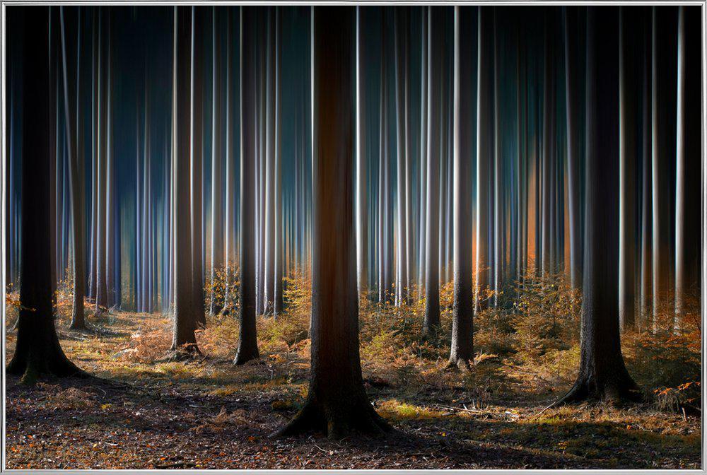 Mystic Wood -Poster im Alurahmen