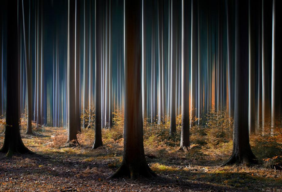 Mystic Wood -Acrylglasbild