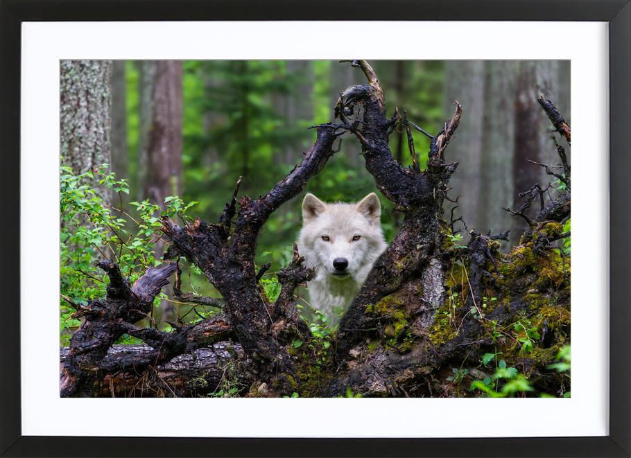Wolf ingelijste print