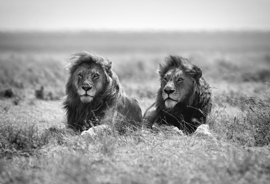 Two Kings - Nicolas Merino Acrylic Print