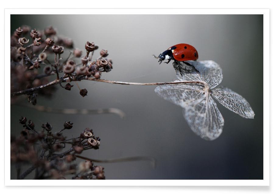 Ladybird on Hydrangea - Ellenvan Deelen Poster