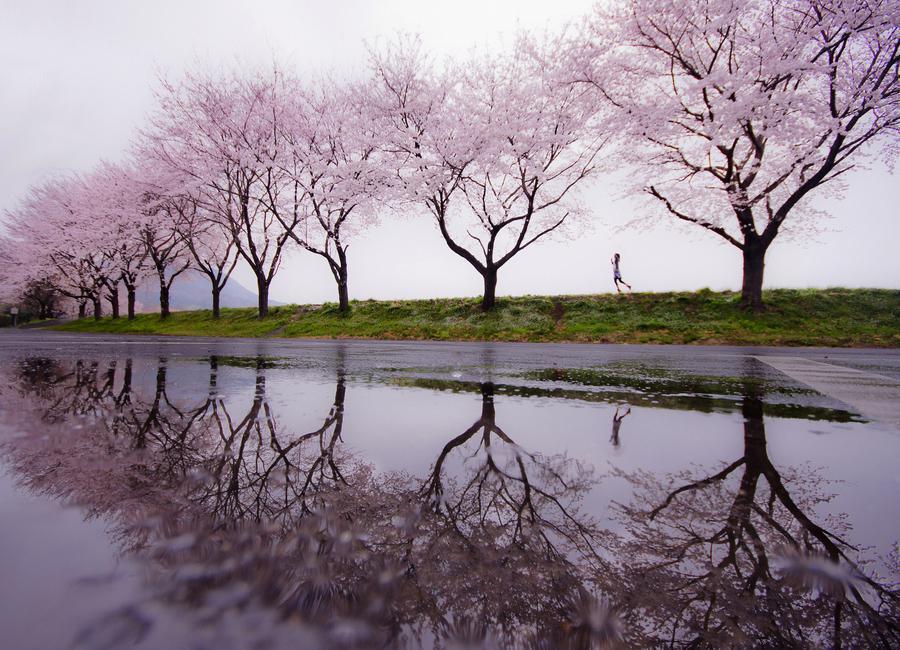 Rain of Spring - Kouji Tomihisa canvas doek