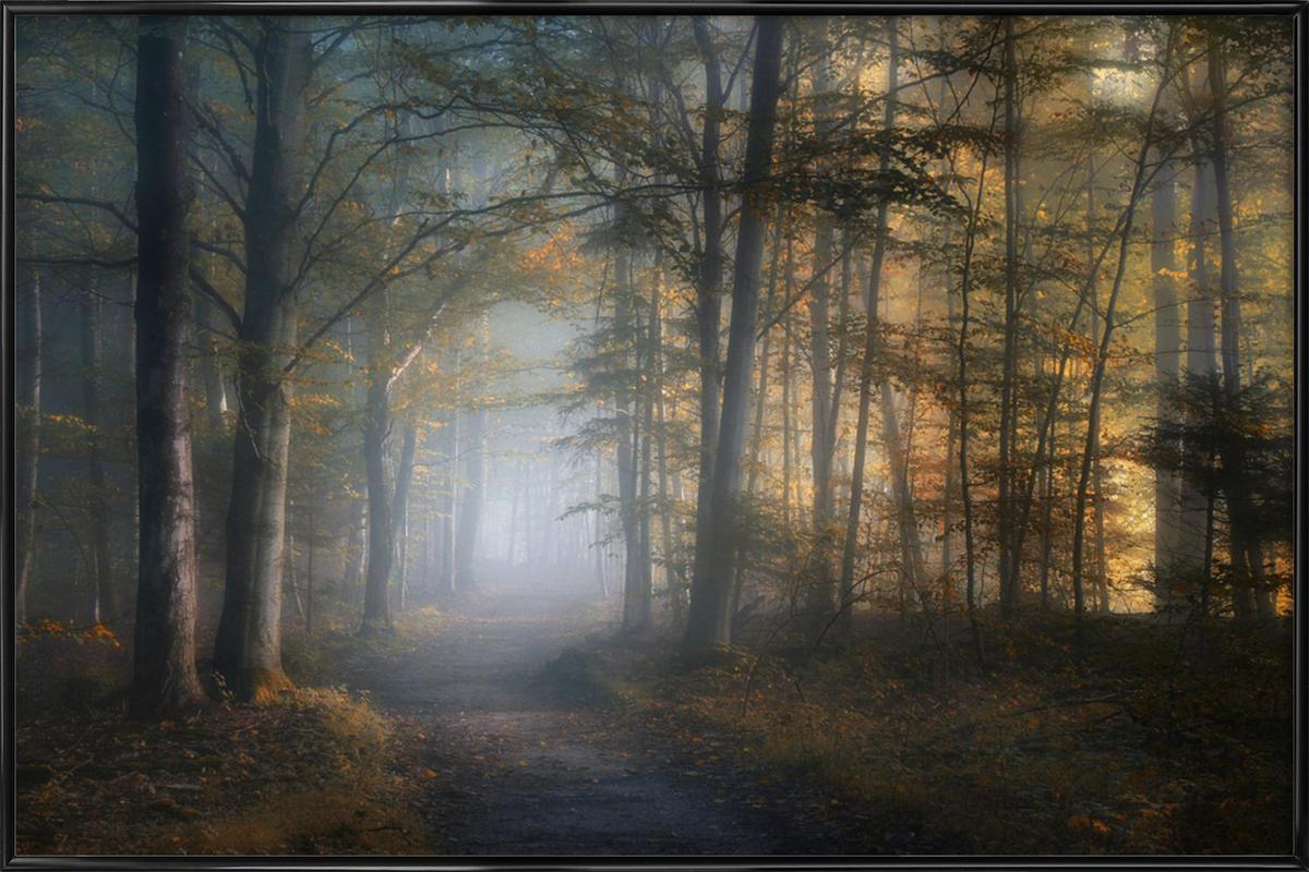 Autumn Symphony - Norbert Maier affiche encadrée