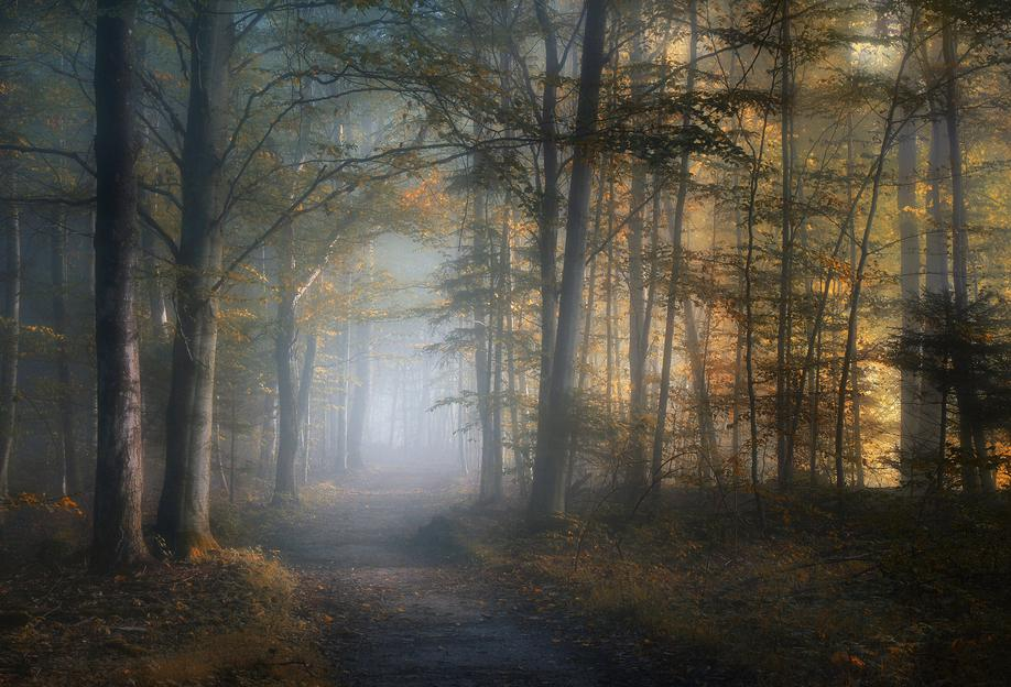 Autumn Symphony - Norbert Maier tableau en verre
