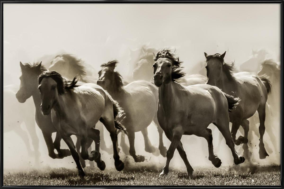 Horse - Heidi Bartsch affiche encadrée