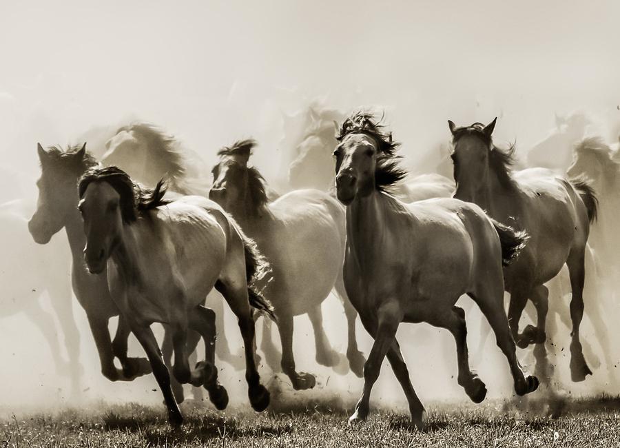 Horse - Heidi Bartsch toile