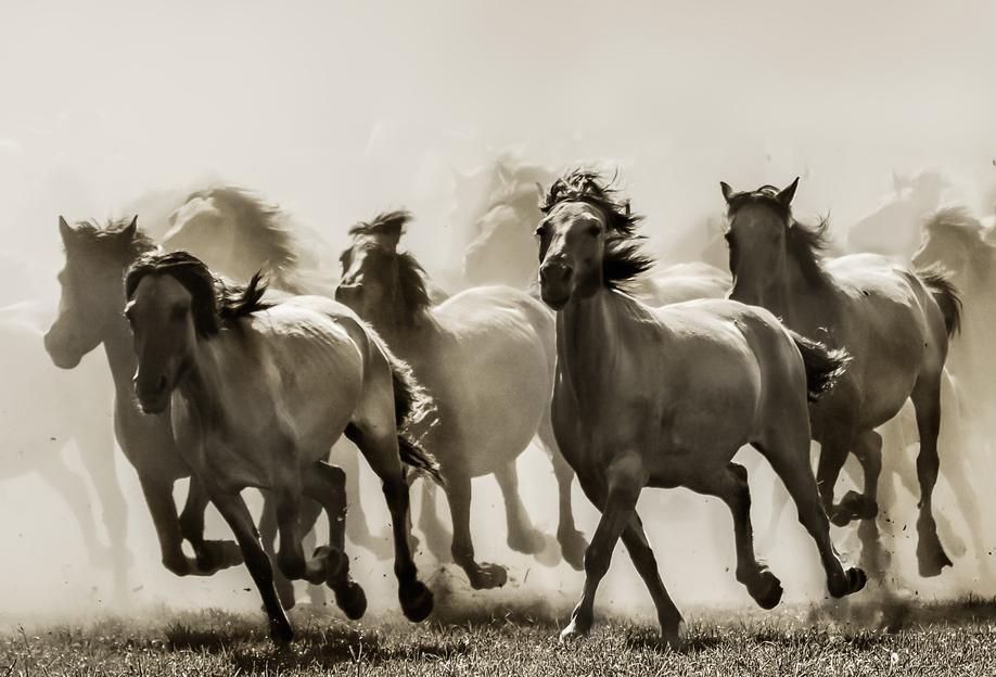 Horse - Heidi Bartsch Impression sur alu-Dibond