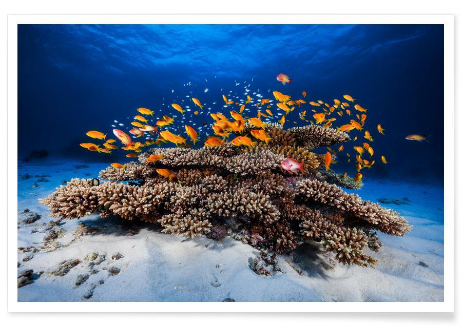 Marine Life - Barathieu Gabriel affiche