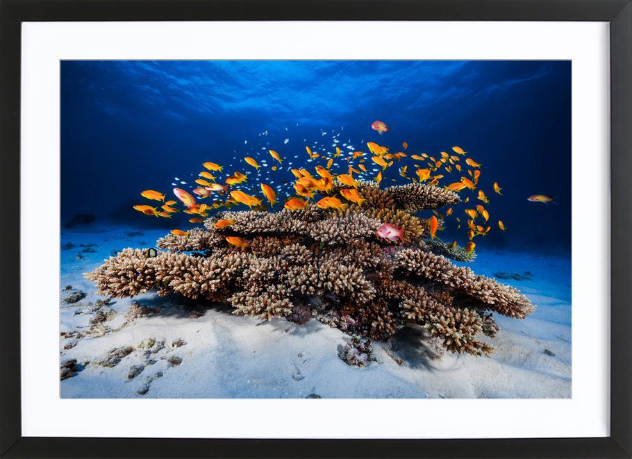 Marine Life - Barathieu Gabriel Framed Print