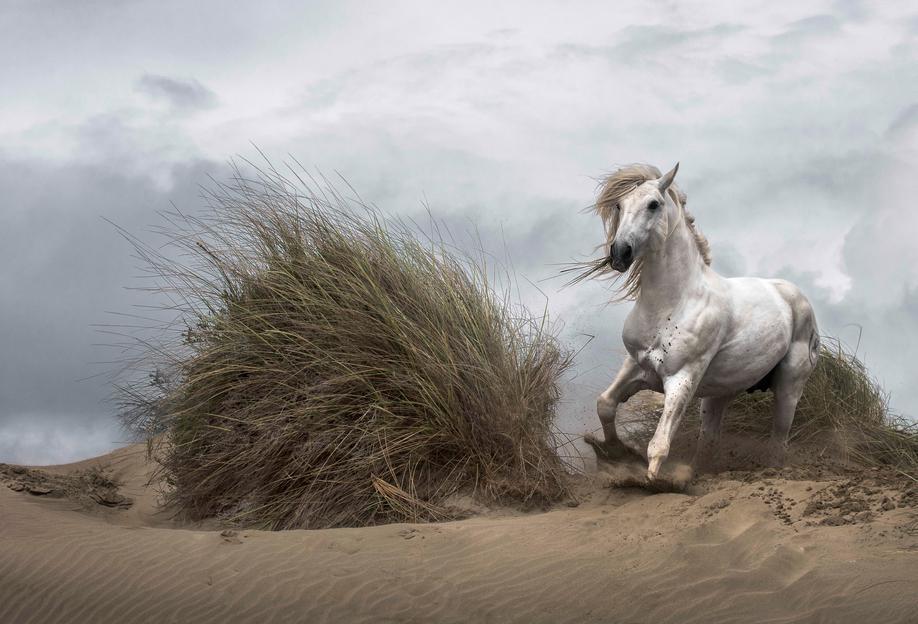 White Stallion on the Beach - LucieBressy tableau en verre