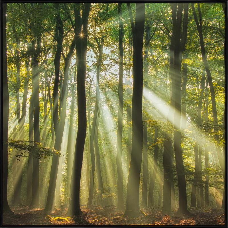Sunny Start to the Day ........ - Piet Haaksma affiche encadrée