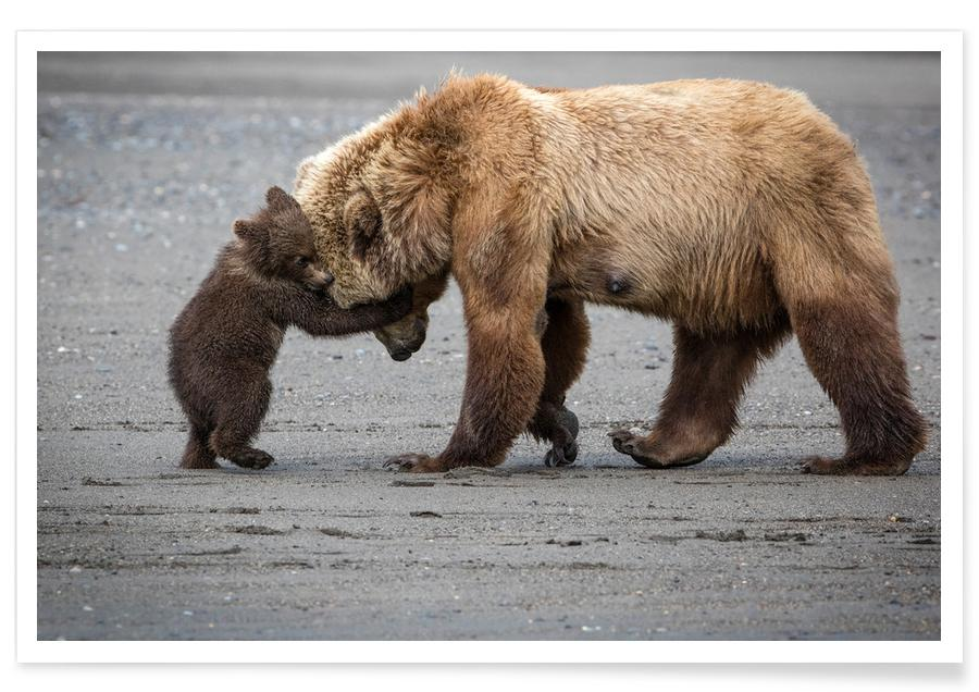 A Little Bear Hug - Renee Doyle -Poster
