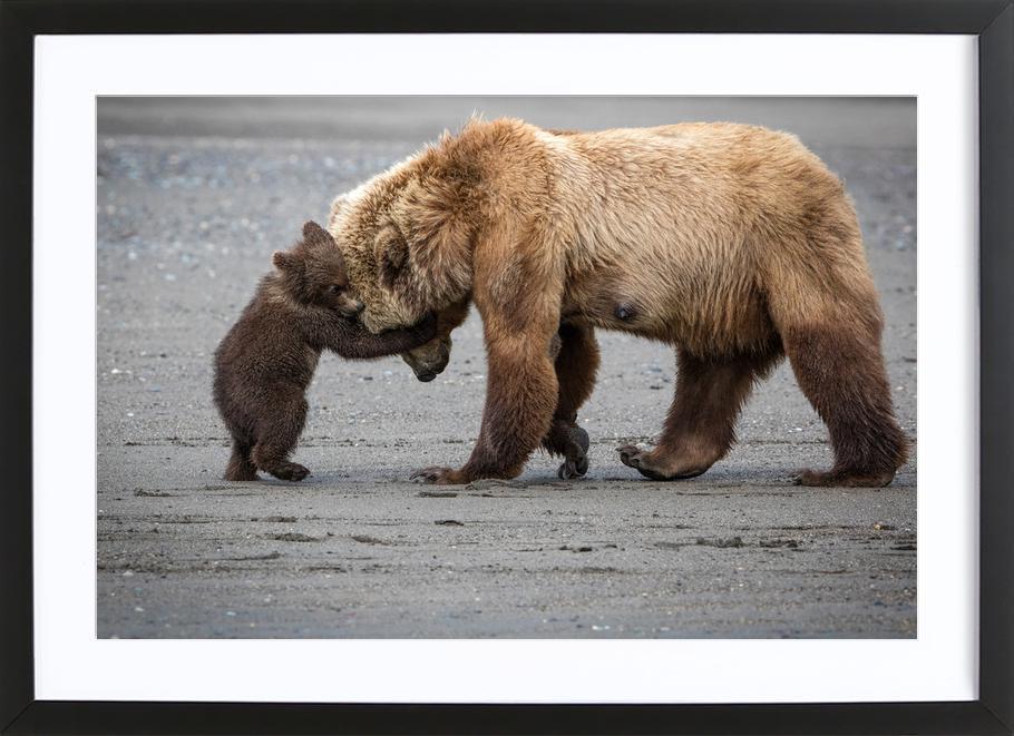 A Little Bear Hug - Renee Doyle affiche sous cadre en bois