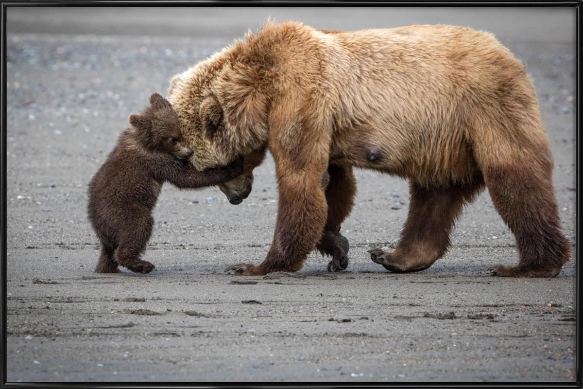 A Little Bear Hug - Renee Doyle Framed Poster