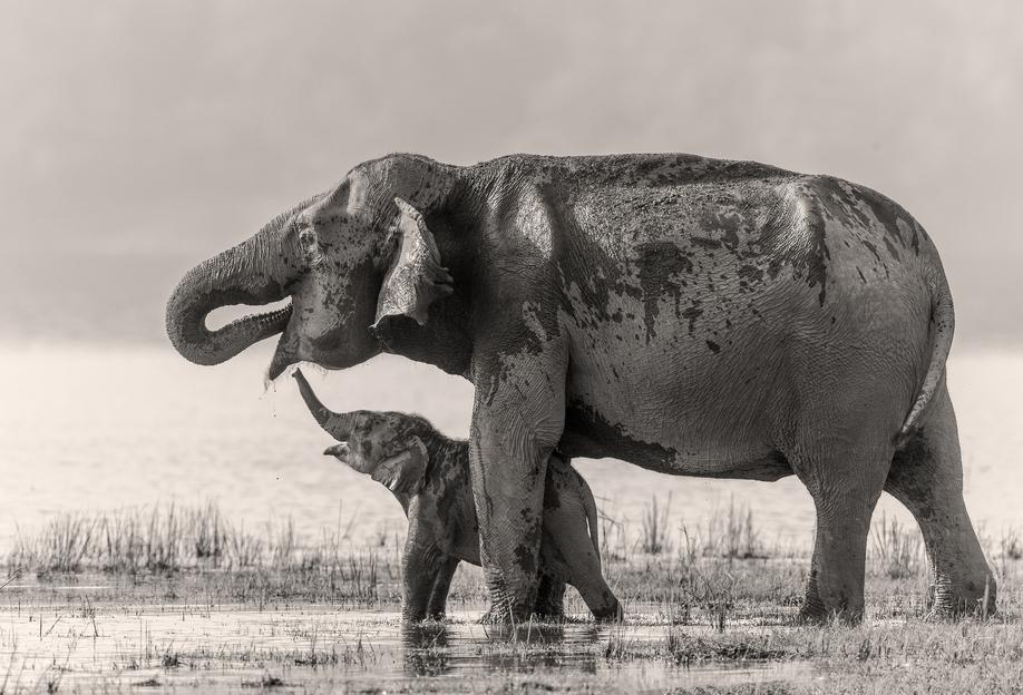 A Touching Moment - Jagdeep Rajput Aluminium Print