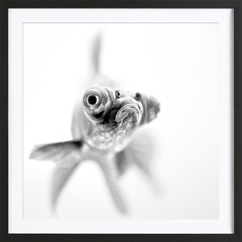Ready for my Close up… - Paul Framed Print