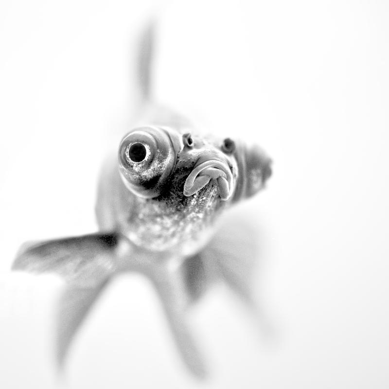 Ready for my Close up… - Paul Aluminium Print