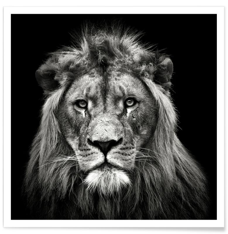 Young Male Lion - Christian Meermann affiche
