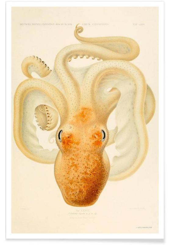 Blæksprutter, Vintage, Octopus - Die Cephalopod - 1915 - Plate 76 Plakat