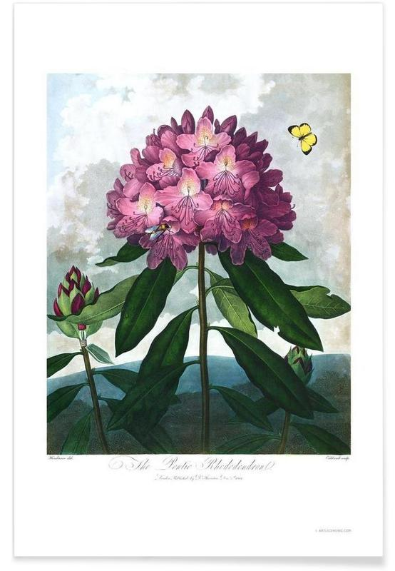 The Pontic Rhododendron affiche