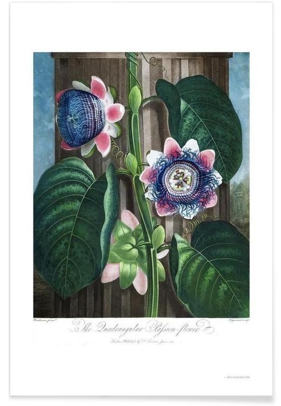 The Quadrangular Passion-Flower affiche