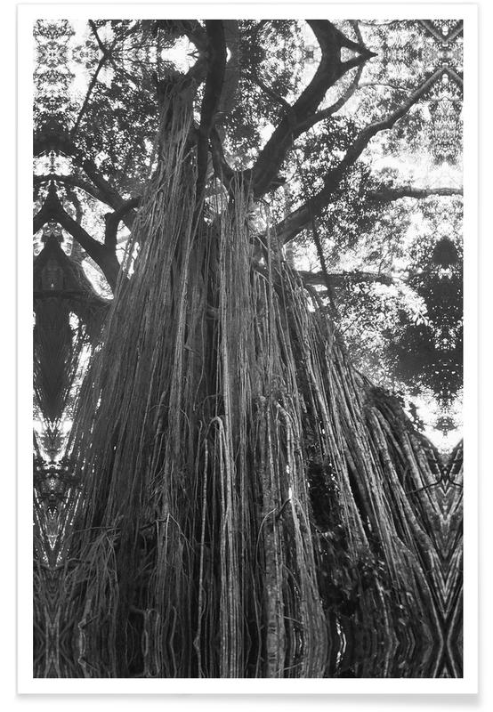 Arbres, Curtain Fig Tree affiche