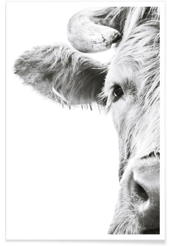 Vaches Highland, Noir & blanc, Highlander I affiche
