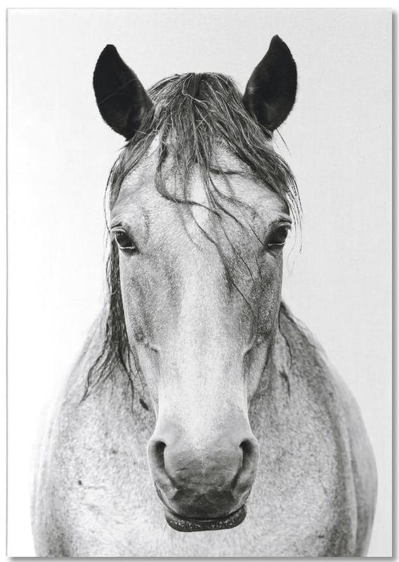Pferde, Schwarz & Weiß, Horse I -Notizblock