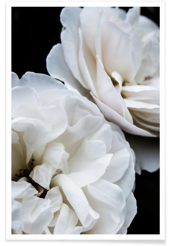 Roses, White Roses Poster