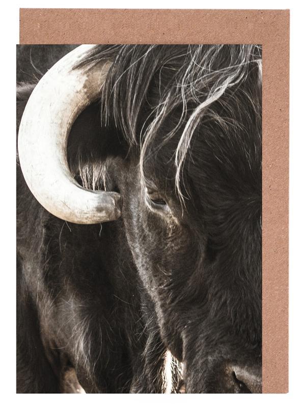 Kühe, Bulls Head -Grußkarten-Set