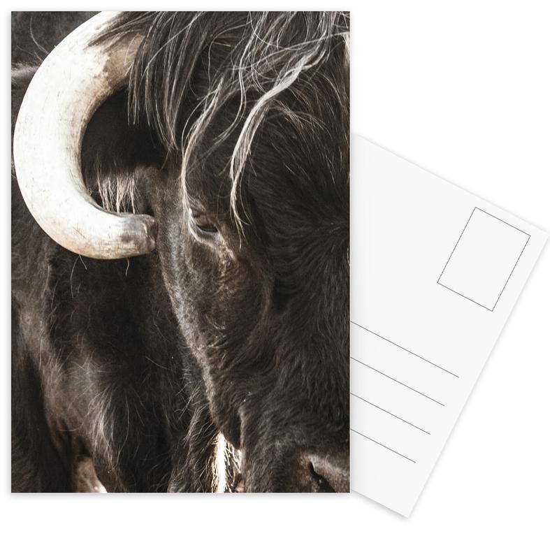 Kühe, Bulls Head -Postkartenset